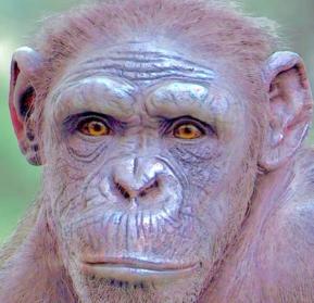'Evolution is the next global crisis'—Mark Maslin tears us a new∀®ᵀ𝖨€£3